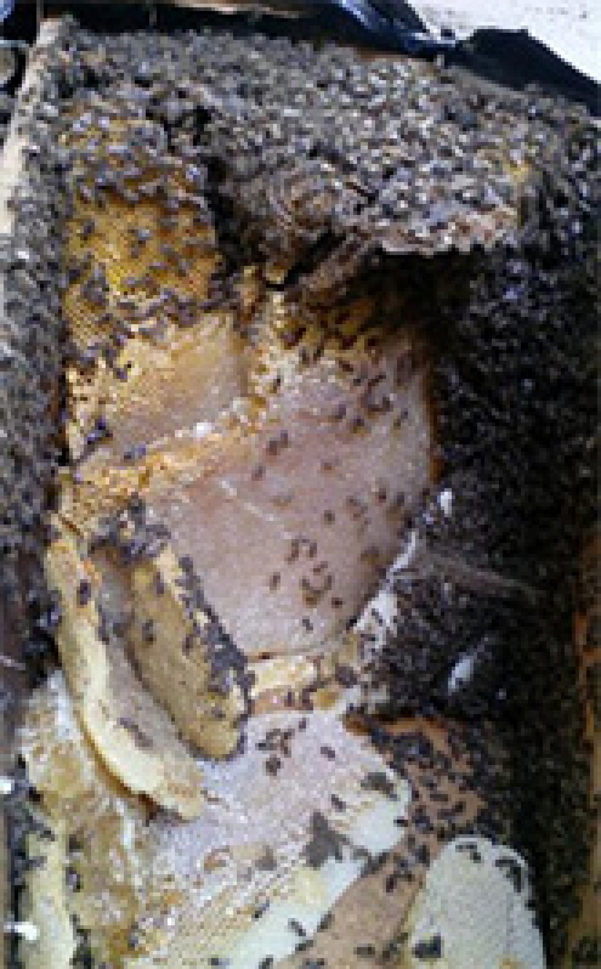 Panal abejas