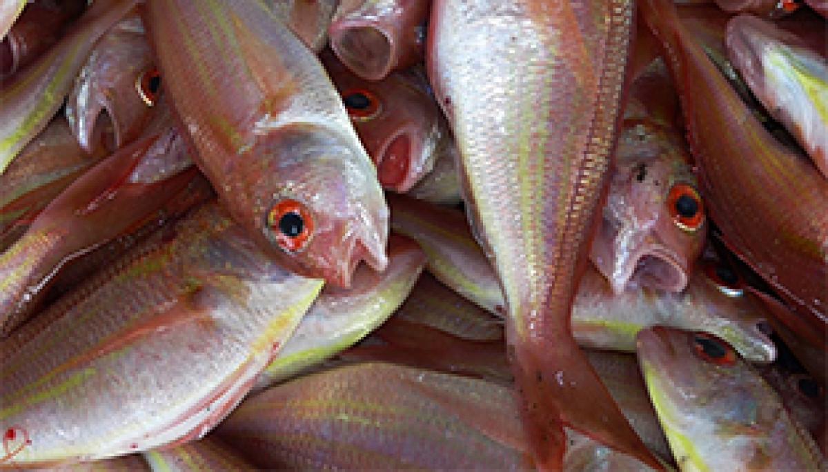 Extenda pesca
