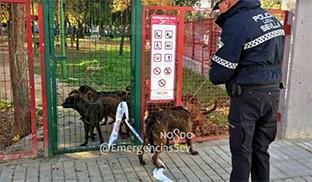 Perros guarderia sevilla